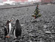 Антарктида, станция Беллинсгаузен (фото, ч.5)